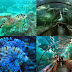 Seaworld Ancol (Seaworld Indonesia)