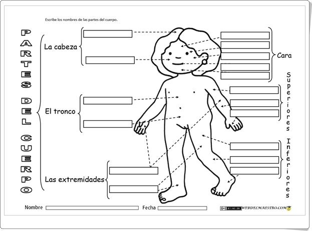 """""""Partes del cuerpo humano"""" (Fichas de Ciencias Naturales de Primaria)"""