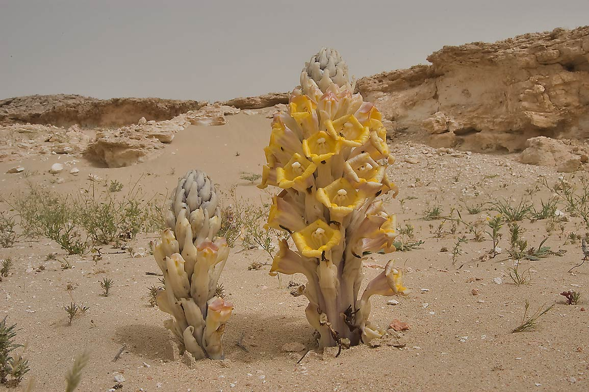 deserts animals and plants - photo #28