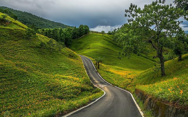 Weg door groene heuvels met gele bloemen