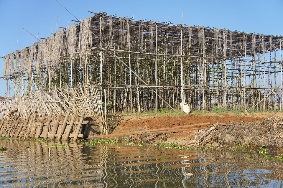 bamboo tensile structures - photo #30