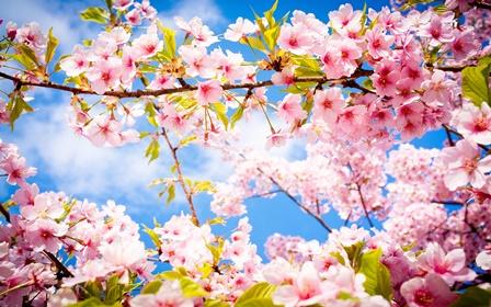 Vjersha per pranveren,poezi per pranveren,pranvera poezi,vjersha shqip per pranveren,pranvera poezi,poezi dhe vjersha per pranveren,vjershe shqip per pranveren,vjersha per stinen e pranveres,poezi per stinen e pranveres