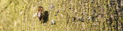 Kilokalorien von Fliege Biene Popel