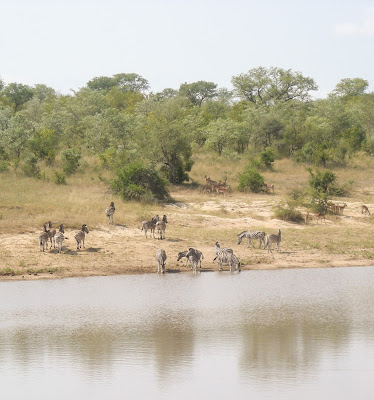 Kruger National Park - watering hole