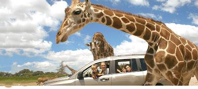 Parque Africam Safari Puebla