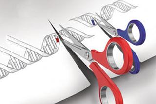 Primera prueba de uso de CRISP en humanos