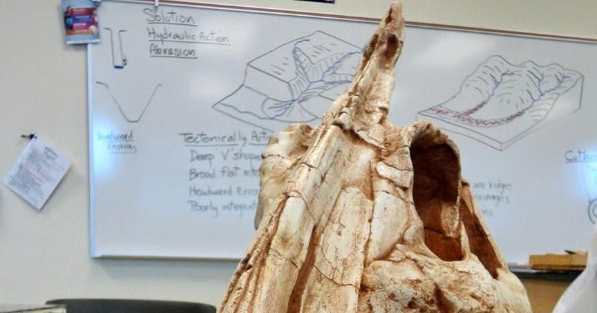 Say Hello to California's New State Dinosaur: Augustynolophus morrisi