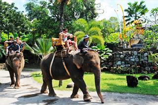 Bali Elephant Ride Tour | Sunia Bali Tour
