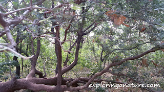 Photo Gallery- Bhimbetka, The Rock Shelters