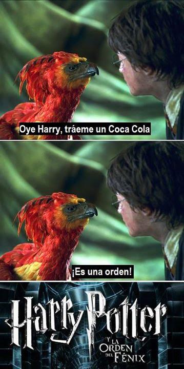 Meme de humor sobre Harry Potter