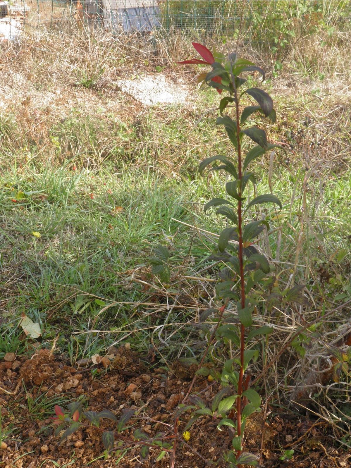 mon jardin quercynois: les petits nouveaux