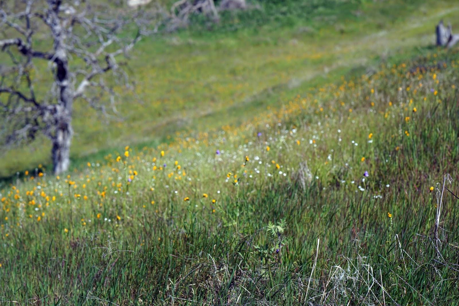 Mid Sierra Musings