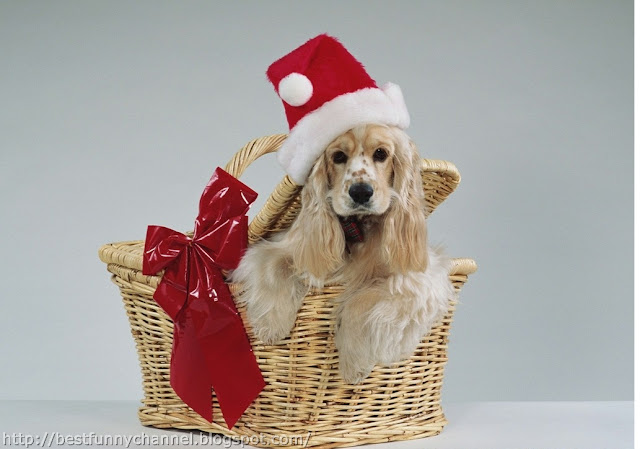 Cute dog in red cap.