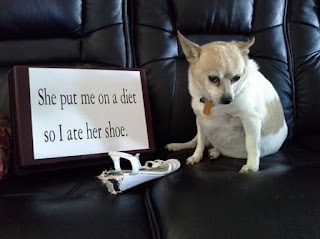 ''Popular Dog Shaming'': She put me on a diet