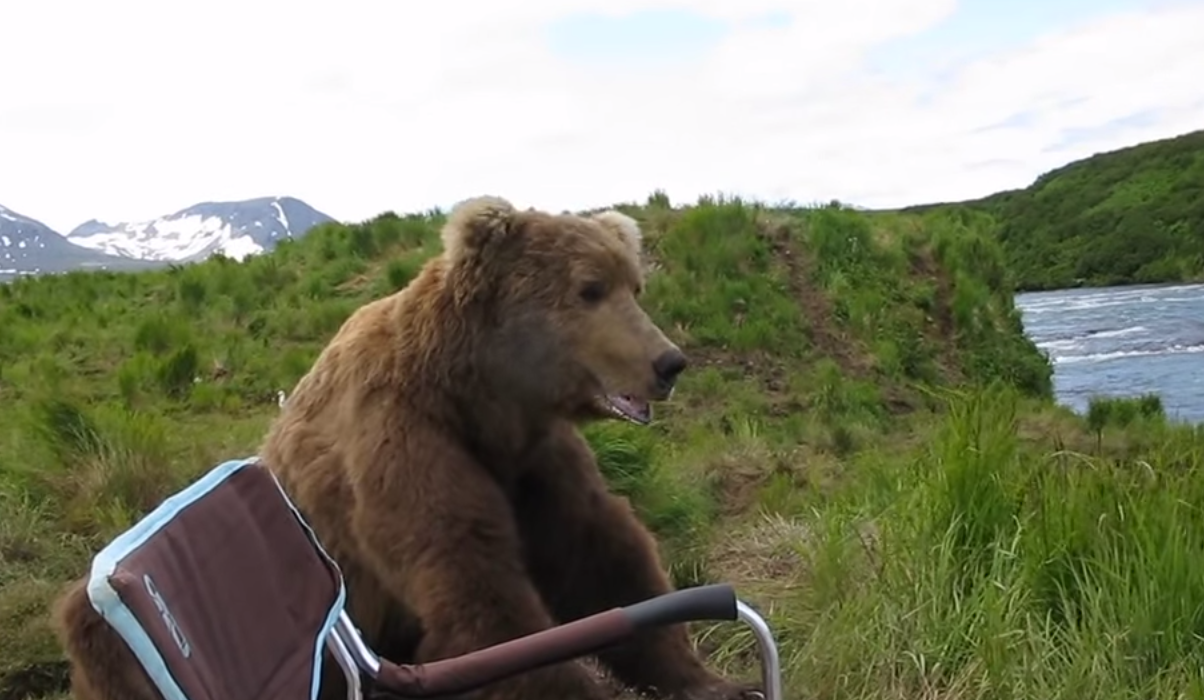 Drew is holding the camera and seems to be very relaxed. - A Brown Bear Sat Down Right Next To Him While He Filmed It All!