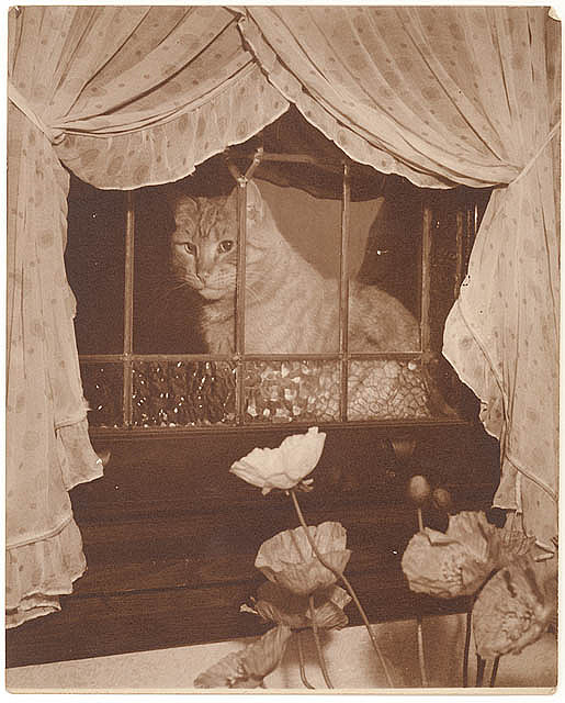 Cat in the window, 1930s, by Sam Hood. From the collection of the State Library of New South Wales