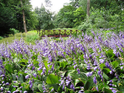 Purple flowers and wooden bridge