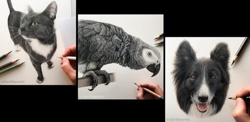 00-Claire-Milligan-Cats-birds-and-Dogs-Realistic-Animal-Drawings-www-designstack-co