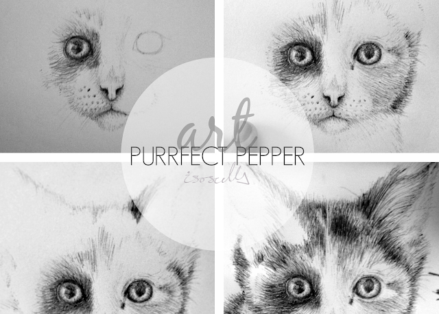 Art Purrfect Pepper Biro Illustration header