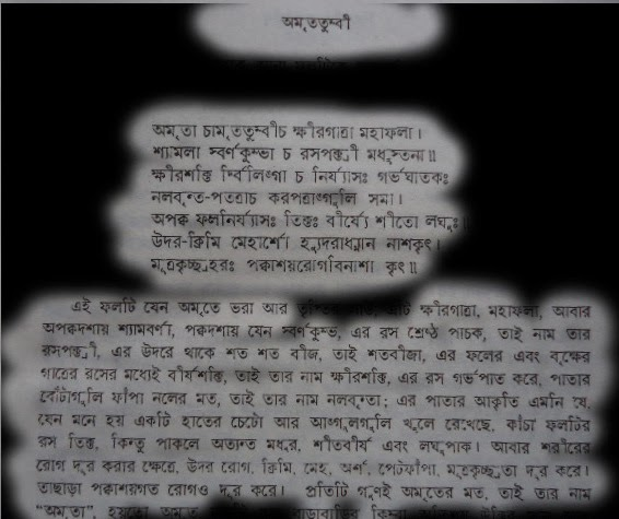 A script behind the Papaya addressed as Amtritatumbi