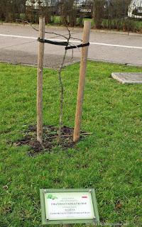 http://fotobabij.blogspot.com/2015/12/drzewo-pamiatkowe-20-lecia-samorzadu.html