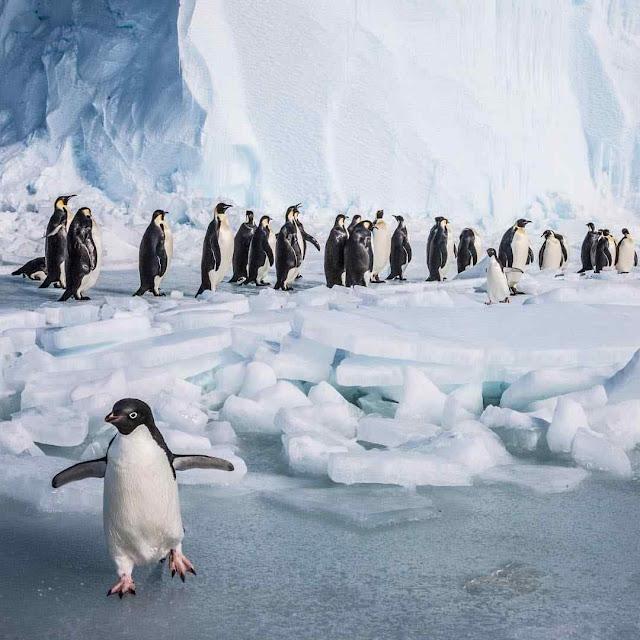 Cada vez mais superfície gelada e mais difícil pescar para sobreviver.