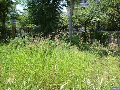 イネ科の植物