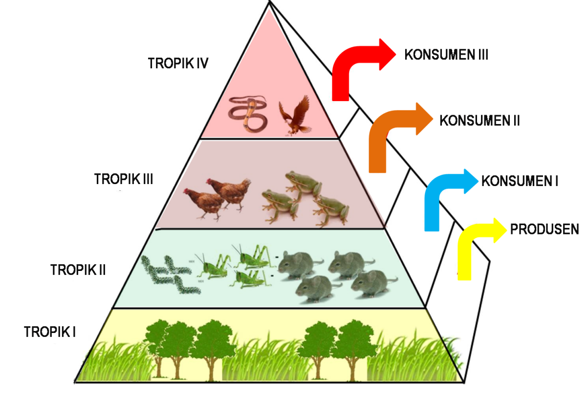 Ekosistem Pekarangan Desa dan Talun   Biologi asyik feat Fkip