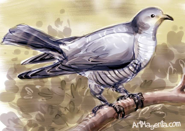 Cuckoo is a bird drawing by ArtMagenta