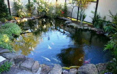 Desain kolam ikan minimalis di lahan sempit, konsep kolam ikan minimalis terbaik