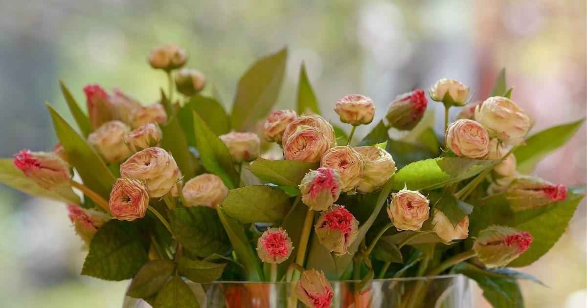 Le Monde De Kitchi Friday Flowerday 12 17