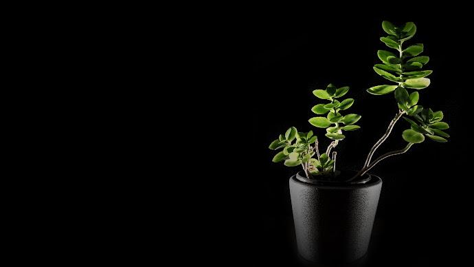 Wallpaper: Natural Green in Darkness