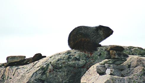 Jasper SkyTram Alberta Rocky Mountains