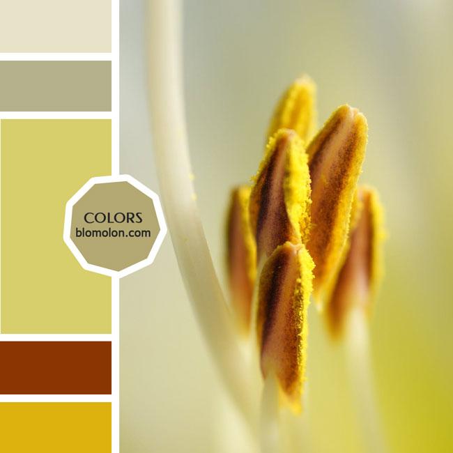 variedad_en_color_moodboards_1a