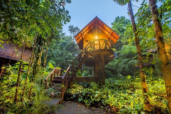 5 Houses In Trees That You Will Love 8