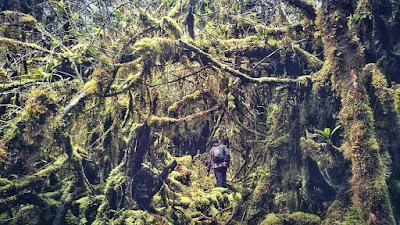 foto jalur pendakian gunung bukit raya