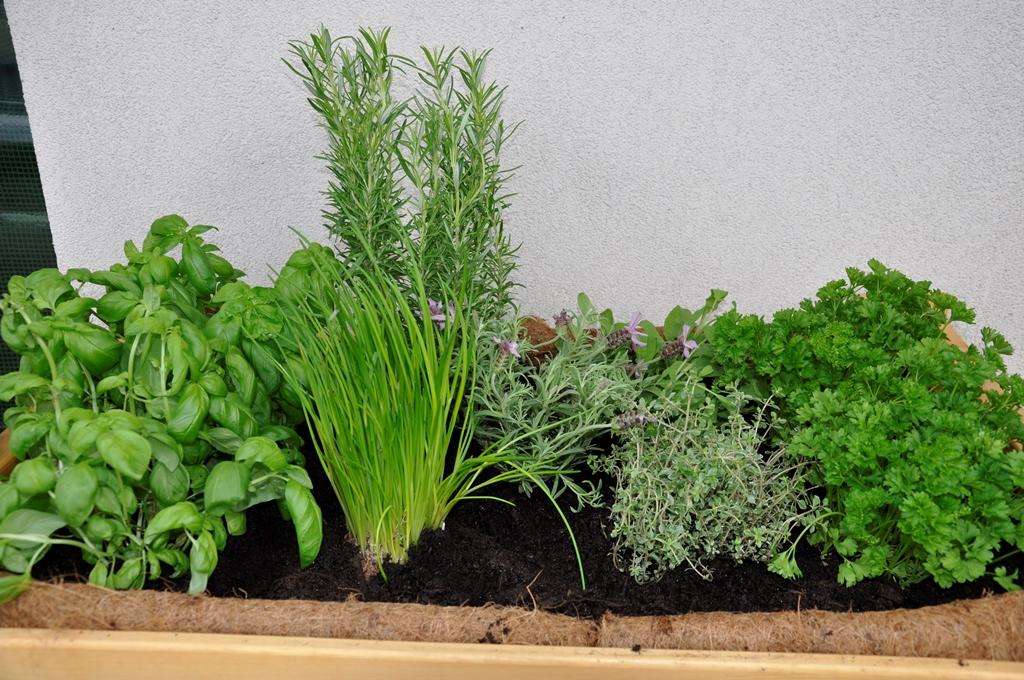 Gartenfieber: Hochbeet Für Küchenkräuter Auf Unserem Balkon