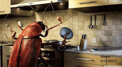 التخلص من الحشرات المنزلية بدون مبيدات , القضاء على الصراصير