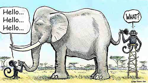 Sang Gajah Dan Monyet Cerita Anak Indo