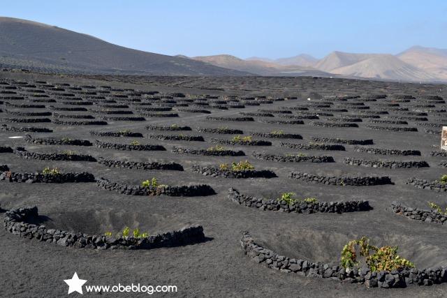 Lanzarote_vinos_entre_volcanes_ObeBlog_07