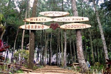 Sejuk dan Segarnya Hutan Pinus Gogoniti Blitar