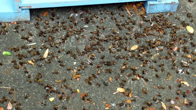 Πλήγμα στη Μελισσοκομία: Κίνδυνος αφανισμού των μελισσών. Κοινοποιήστε!!!