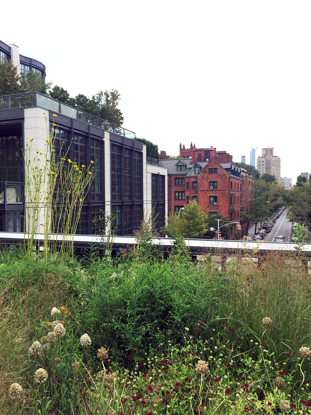 views from the highline