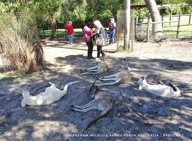 Caversham Wildlife Park, Perth Australia