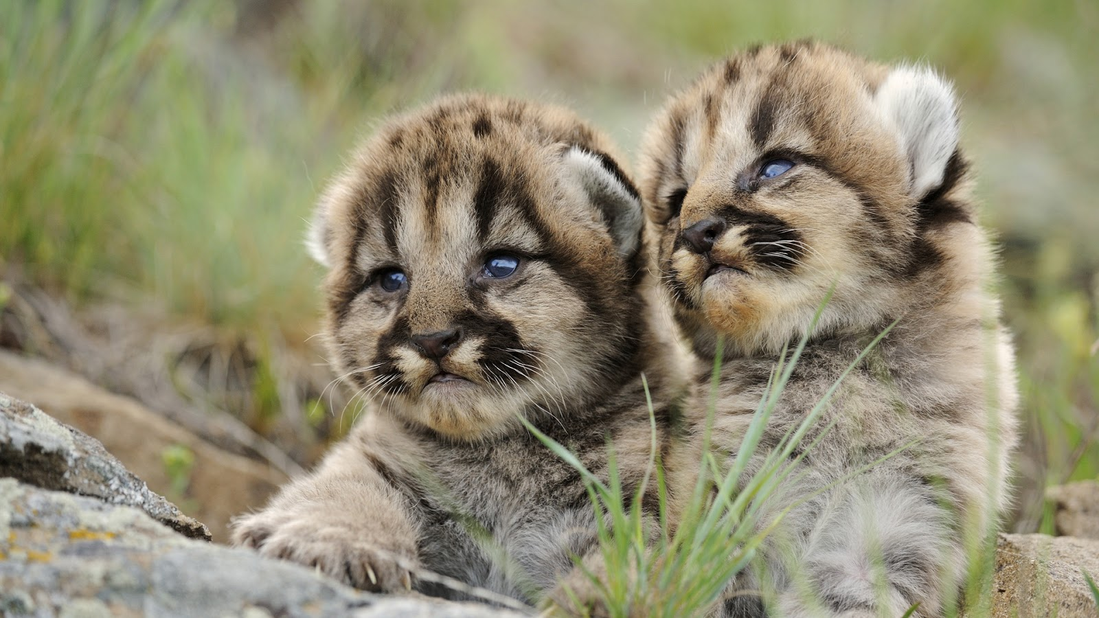 Cute Leopard Cubs ~ Mystery Wallpaper