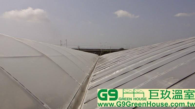 29.圓鋸鋼骨加強型溫室結構,屋頂結構農膜每一組補強壓條固定農膜條與結構農膜密合完成外觀
