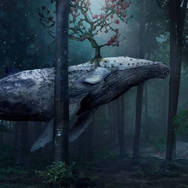 10-The-whale-Natacha-Einat-www-designstack-co