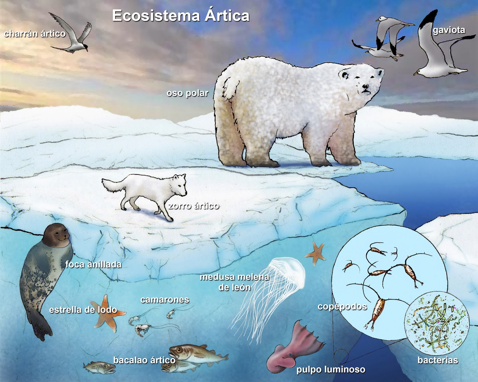 Grade 9 Science: Nov. 22 – Introduction to Ecology