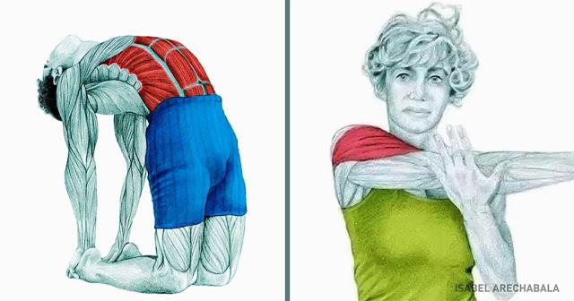 21 εικόνες που εξηγούν ποιοι μύες επηρεάζονται όταν τεντώνεστε