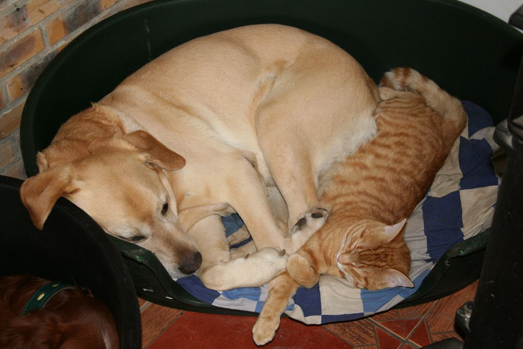 32. Dog and Cat
